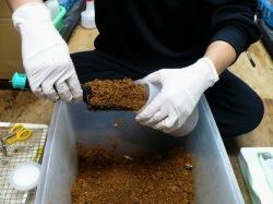 菌床を飼育容器に入れます。