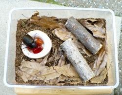 カブトムシの産卵セットの完成です。