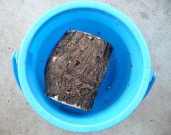 産卵木の水浸け